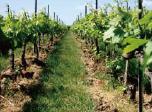 ジャクソン 特級&優れた一級畑の葡萄のみ使用